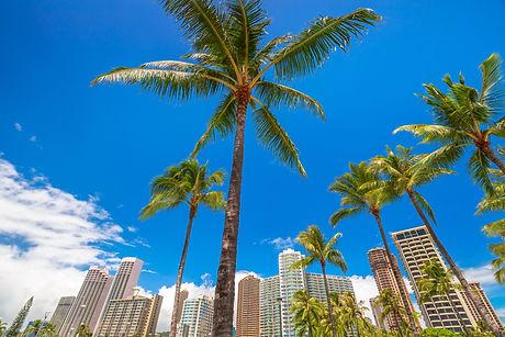 Honolulu city skyline with palm trees. H