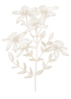 Blütenstiel.png