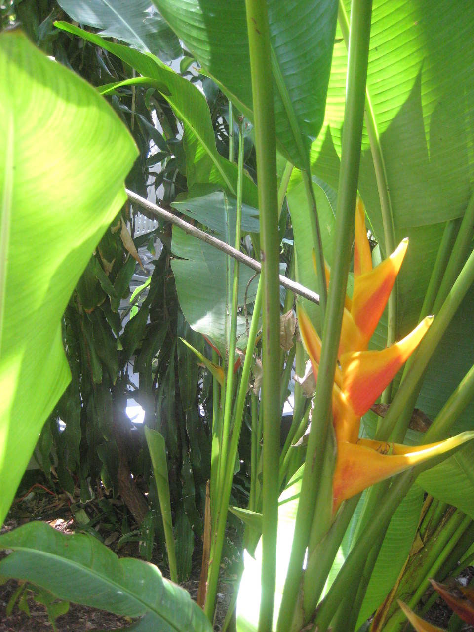 DH Parrot Flower