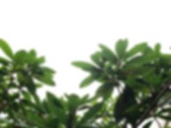 Leaf oMC
