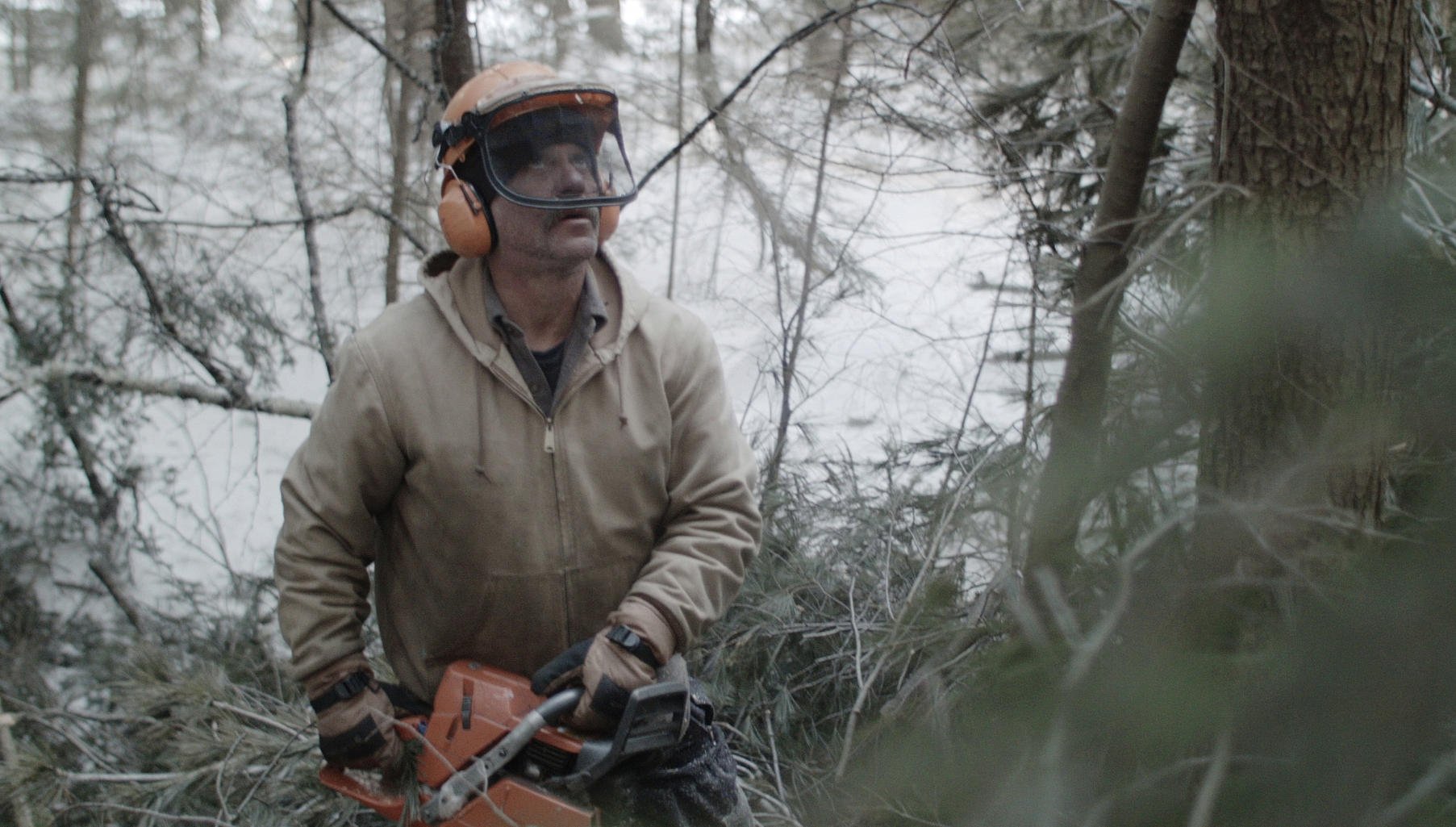 Bob and the Trees: From the Berkshires to Sundance