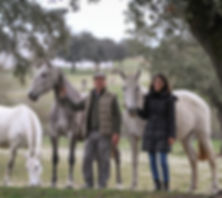 Passeios a cavalo, Horseback riding, aulas de equitação Monte Barrão