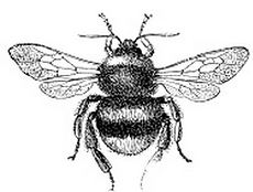 maryland bee removal