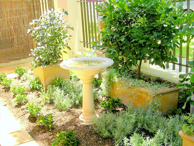 The perfumed garden garden design and consultation adelaide for Courtyard home designs adelaide