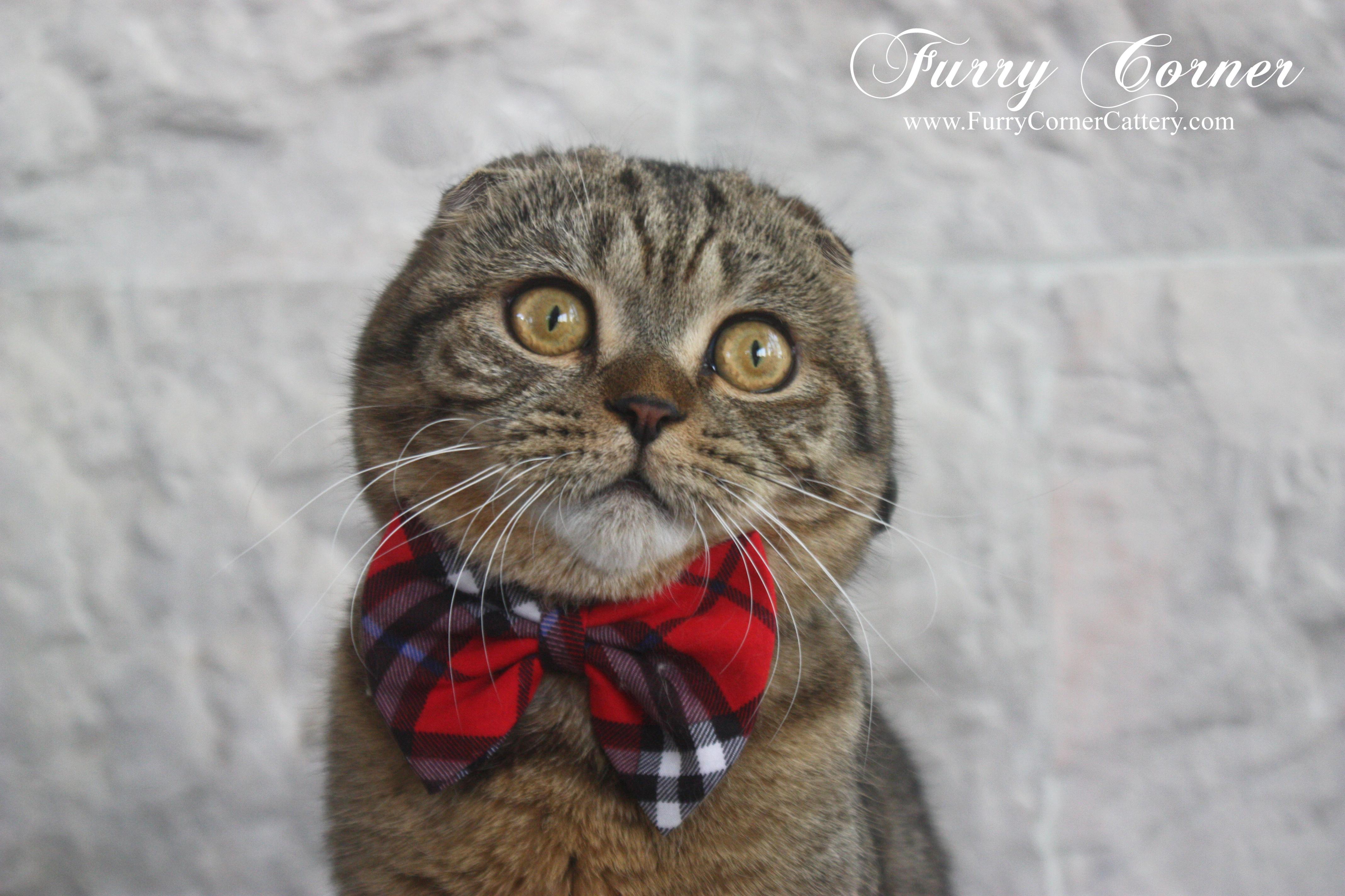 Фурри кошки 18 10 фотография