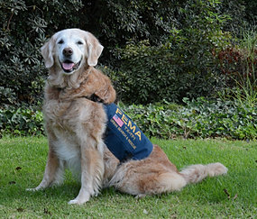 20 years celebration pictures with dogs - the diamond minecart custom mod adventure firefighter pictures