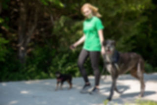 Manhattan, KS professional dog walker with miniature pinscher and great dane.