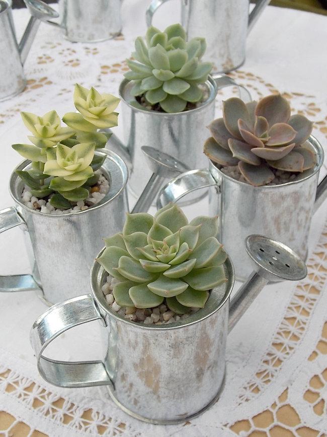 Wedding Gift Baskets Brisbane : Mini watering canWedding Favours