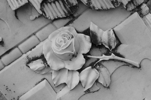 A Rose on the grave