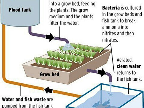 Aquaponics design philippines best ponic for Hydroponic system with fish