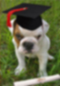 Puppy with diploma hat and certificate