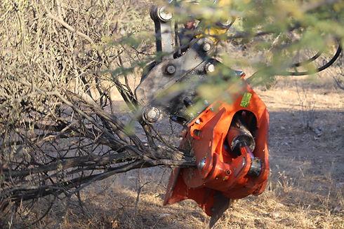 Bioeconomy sector, bush, biomass, harvesting