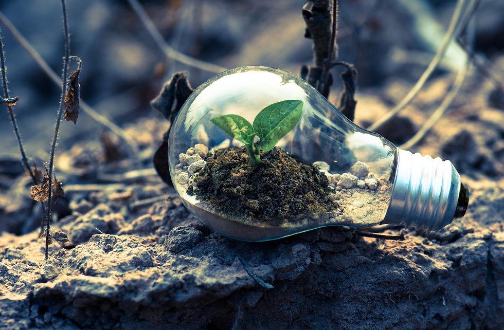Green biomass energy