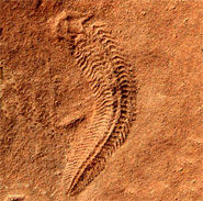Fossil dating example