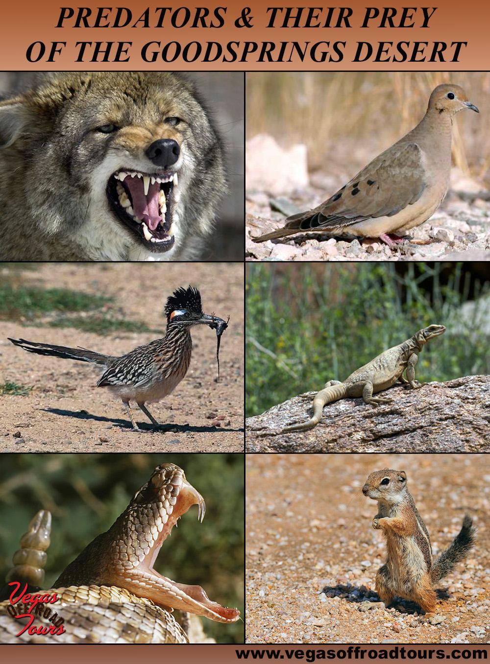 Predation Desert Goodsprings Desert Predators
