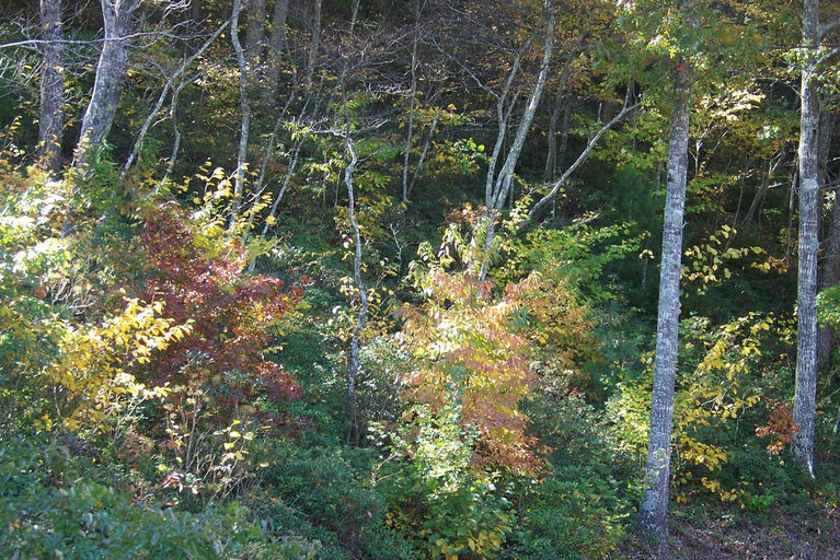 2011 fall view.jpg