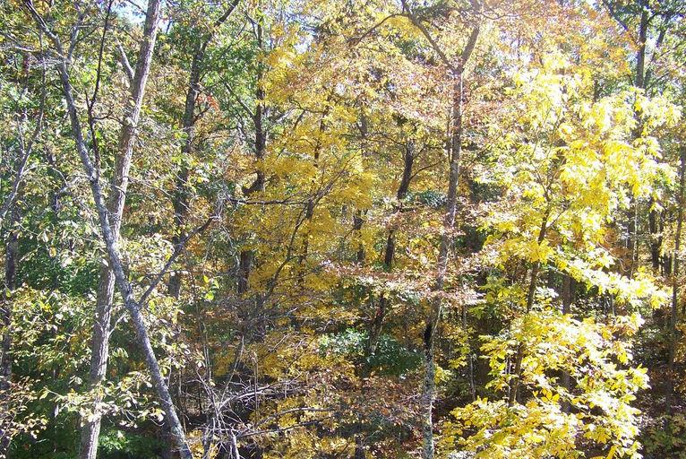 2011 fall view6.jpg