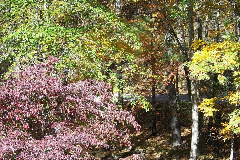 2011 fall views1.jpg
