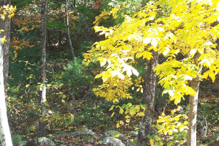 2011 fall view4.jpg