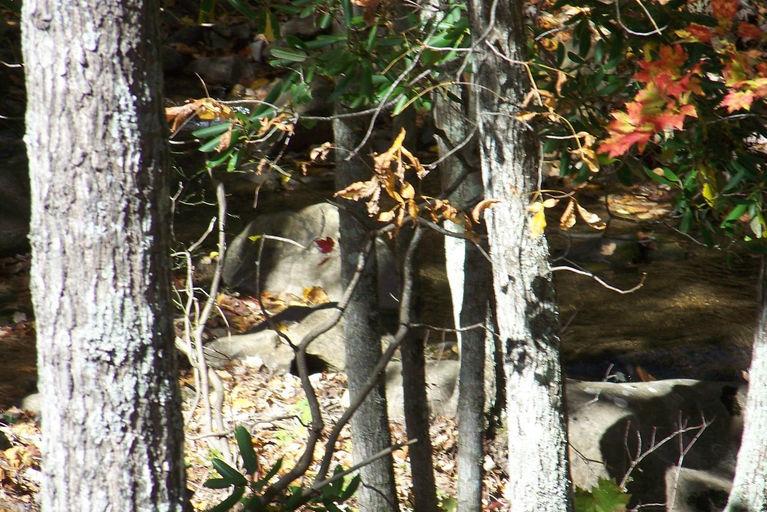 2011 fall view1.jpg
