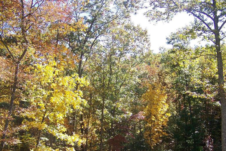2011 fall views5.jpg