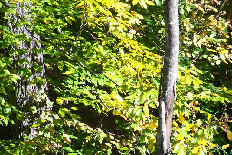2011 fall view2.jpg