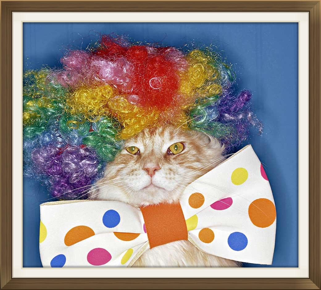 Dress up your pet day - From All Of Us Here At Friends Of The Animal Village Have A Very Happy Dress Up Your Pet Day