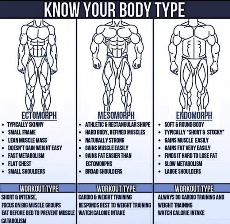 Comparison of Body Types and Body Image | The Tribe Strength Through ...