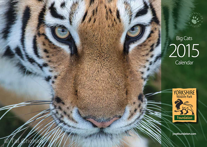 Big Cats Calender 2015   Yorkshire Wildlife Park