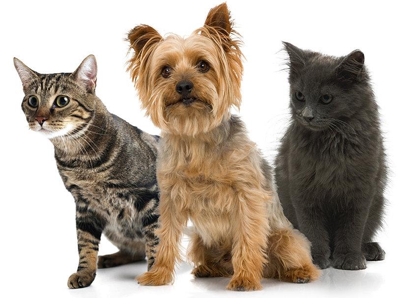 Putting a pet up for adoption quarterly