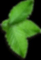 Omaha Tree Service | Omaha Tree Removal | Omaha Tree Trimming | Omaha Pest & Termite Control Exterminators | Tree Lawn Medic - Omaha NE
