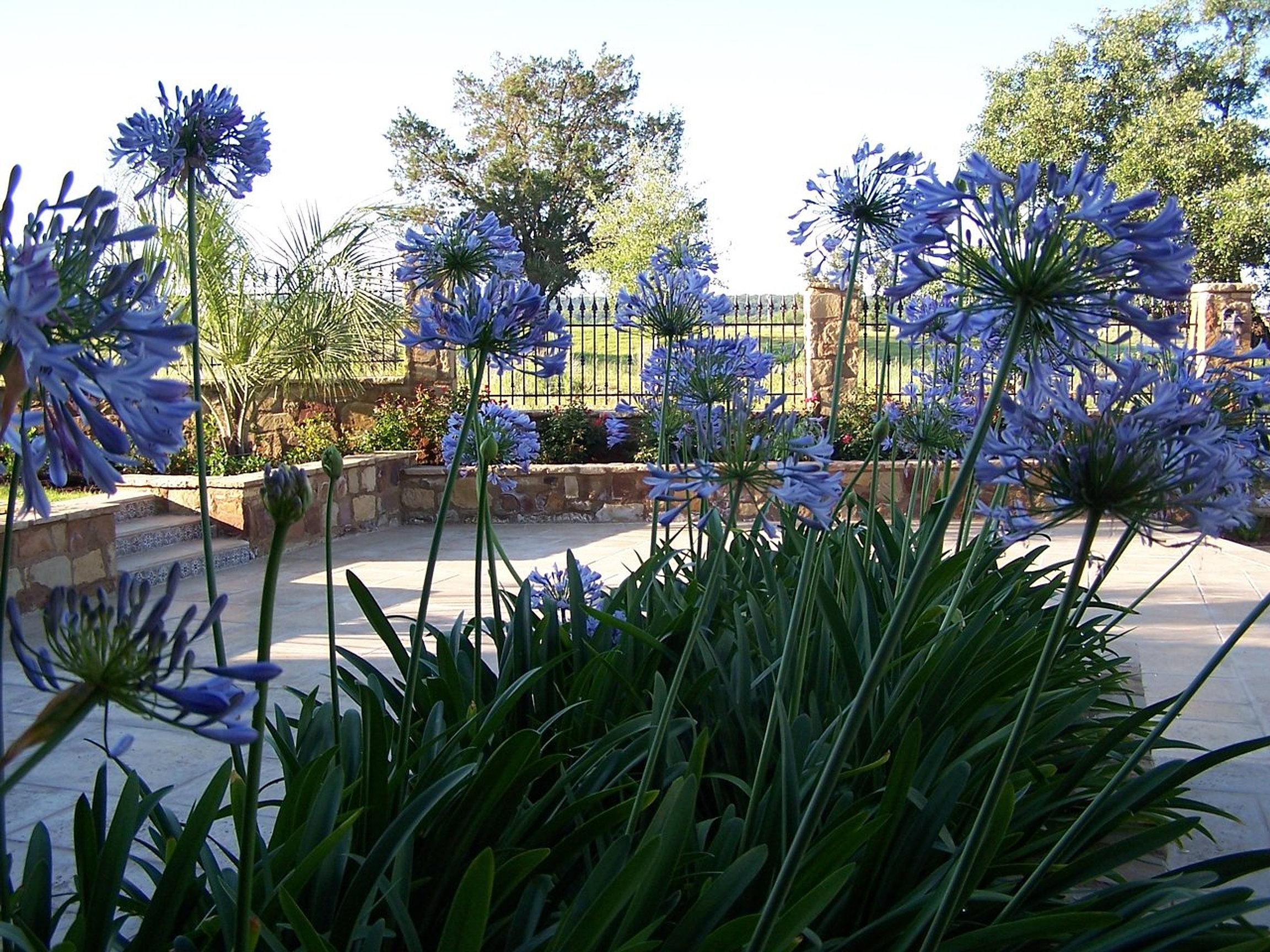 Jxc Landscaping Austin Tx Landscape Professionals Jxc