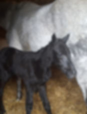 Mare and Foal Horse 2.jpg