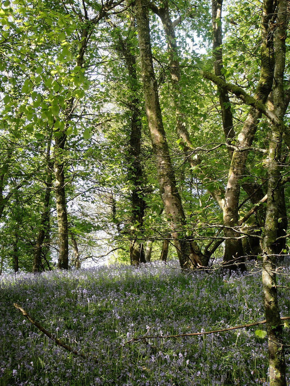the hillyfield why on earth would planners threaten this beautiful woodland shots