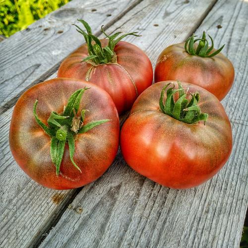 Семена помидоров по почте