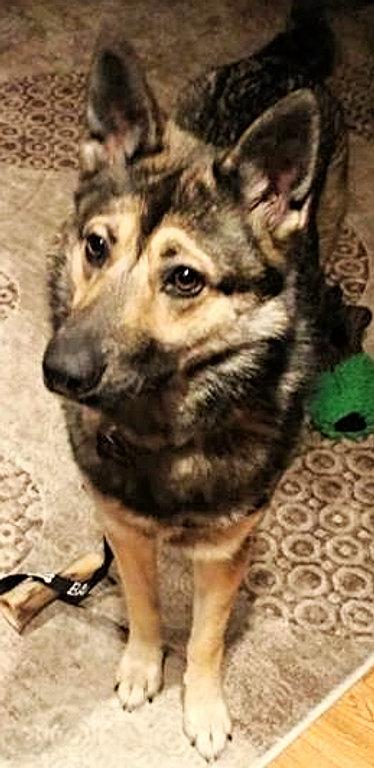 Paws It Forward Dog Rescue Kelowna