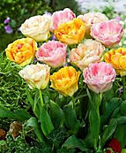 tulips double pastels mix.jpg