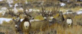 Mule-Deer-Sagebrush-by-Susan-Morse_edited_edited.jpg