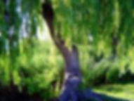 tree-1560184_1920.jpg