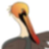Pelican 1_edited.png