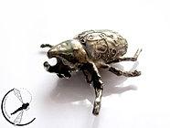 Tropikalny chrząszcz