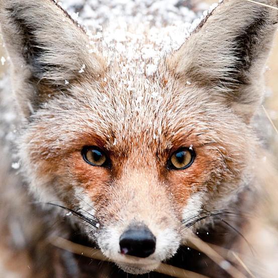 Vianney Janssens – Instants sauvages, Photographie Nature