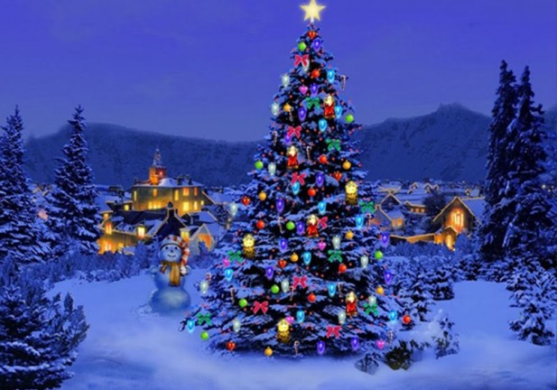 Pictures Of Christmas Trees festival of christmas trees 2016 | stjohns