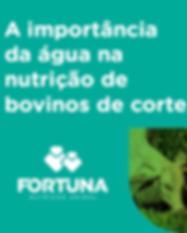 fortuna_capa_infografico.png