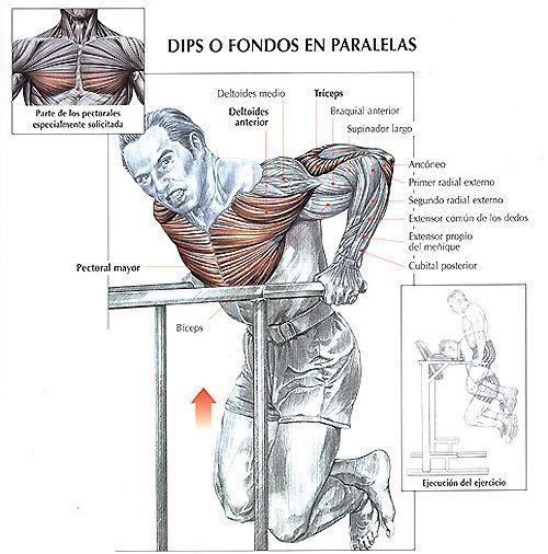 Rutinas fitness created by kamo4ever based on blank website ejercicios para pectorales - Barras de ejercicio para casa ...