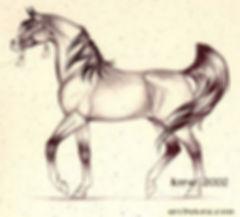 Julgamento do Cavalo Árabe
