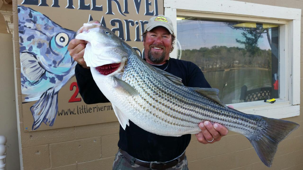 Giant on weiss lake weiss lake alabama crappie bass and for Weiss lake fishing report