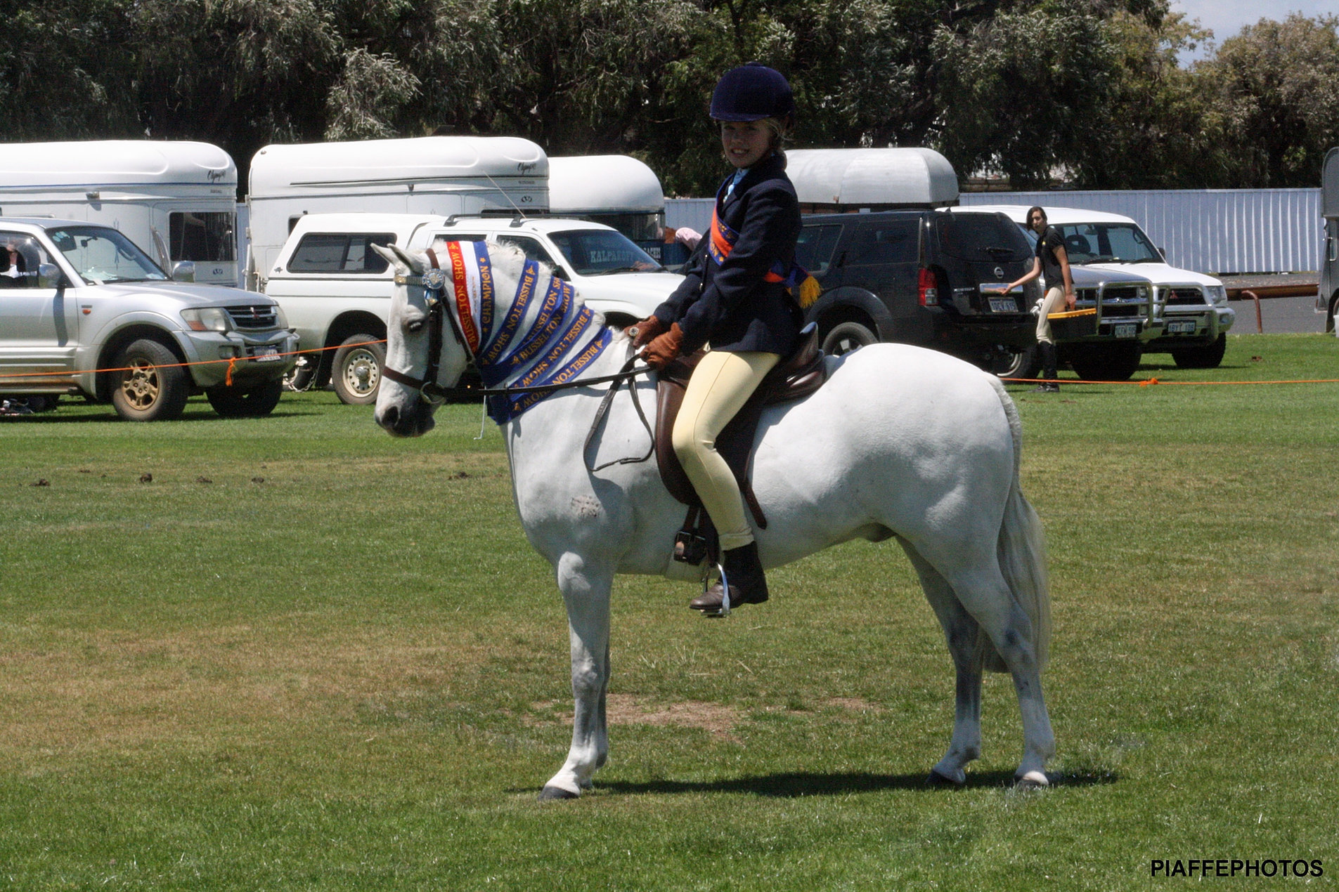 Bandeeka Fever Champion Small Pony