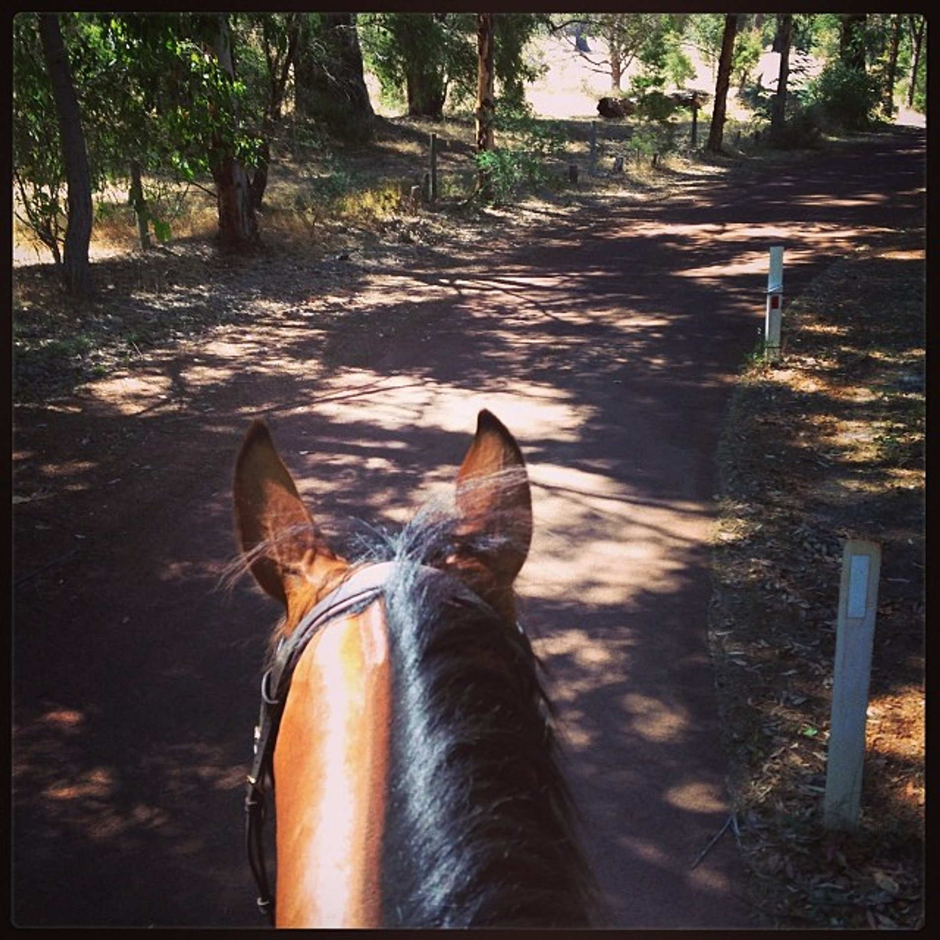 Summer roads#dunsborough equine lodge#riding#love#summer