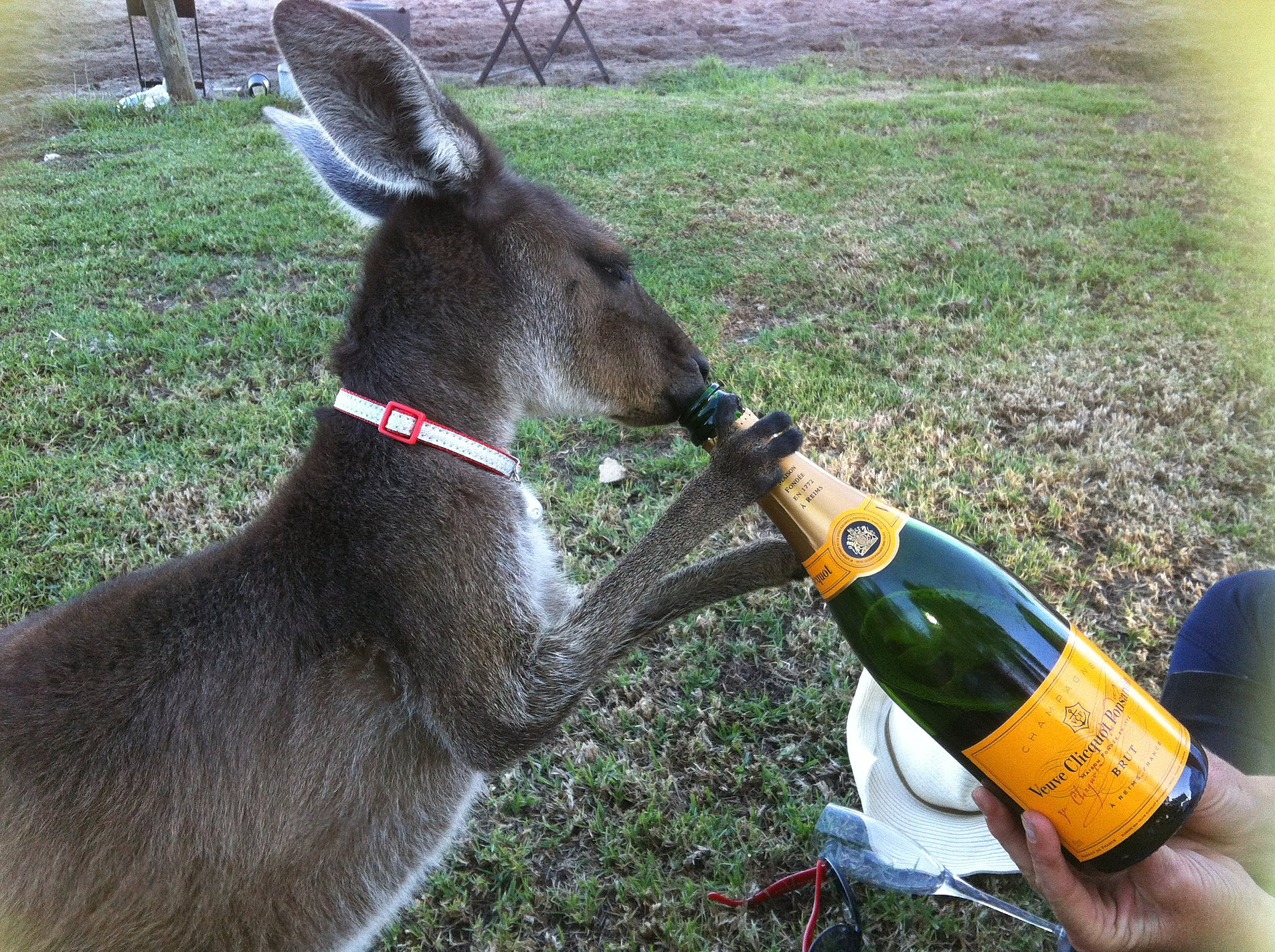 Ruby Roo Celebrates